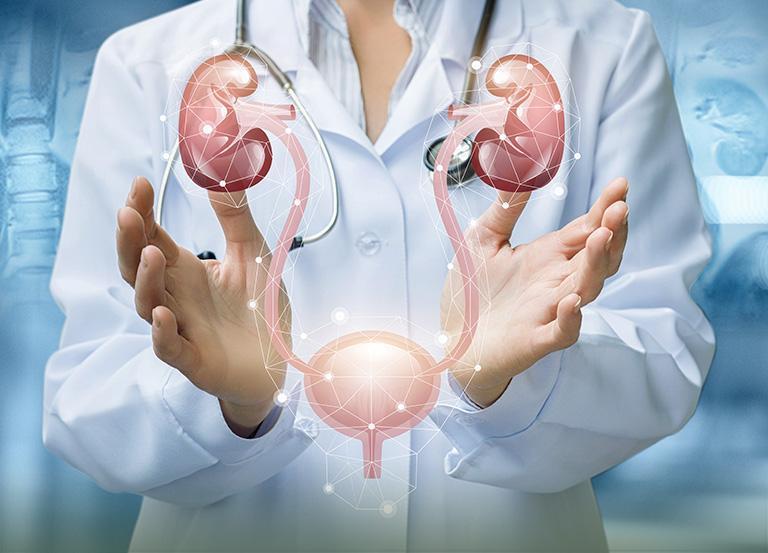 Układ wydalniczy pomiędzy dłońmi lekarza